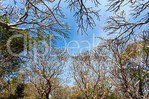 plumeria forest