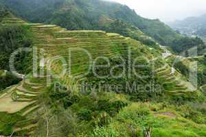 rice fields terraces in philippines
