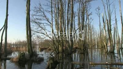 moorlandschaft am kummerower see