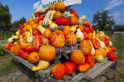 colorful pumpkins on a tractor trailer