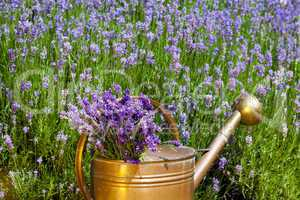 copper watering can with lavender