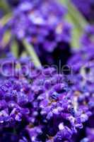 macro shot of lavender flowers