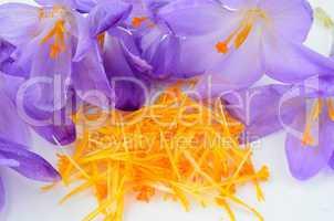 saffron spice close up