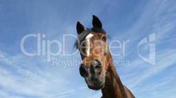Pferd Himmel