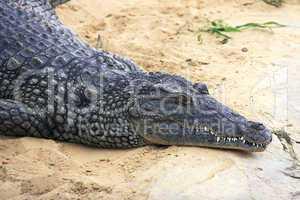 Lazy crocodile