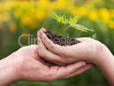 man and boy holding green plant in hands.
