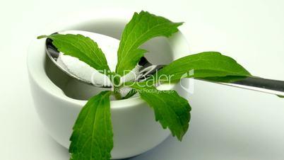 stevia, pflanze für zuckerersatz
