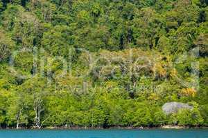tropical jungle coastline