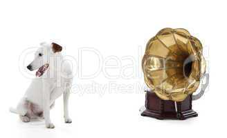 jack russell terrier sitting next to gramophone
