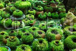 flower pots covered with moss