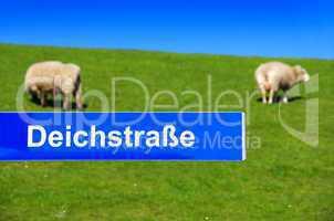 Schaf auf dem Deich mit Strassenschild und Beschriftung