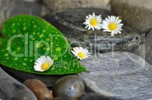 blatt wellness steine balance