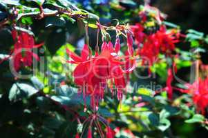 bright fuchsia on a dark background