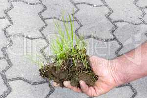 hand holding blades of grass with earth in front of concrete pavement
