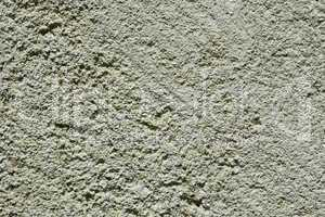 Section of limestone closeup