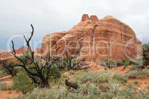 Arches Nationalpark Felsen