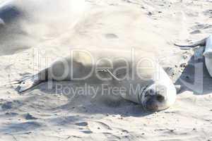 See Elefant bewirft sich mit Sand