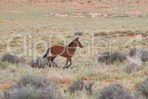 Wildpferd Fohlen