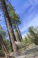 Peaceful Hammock Hanging Among the Pine Trees