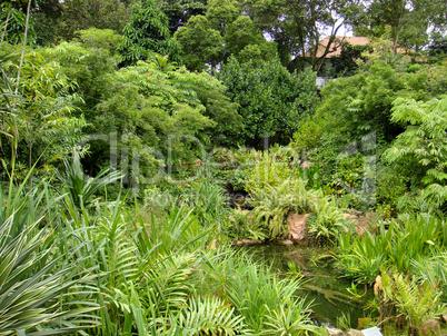 fluss wald regenwald bucht dschungel park blumen natur unber hrt gelb gr n romantisch. Black Bedroom Furniture Sets. Home Design Ideas