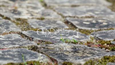 Active garden snail crawling