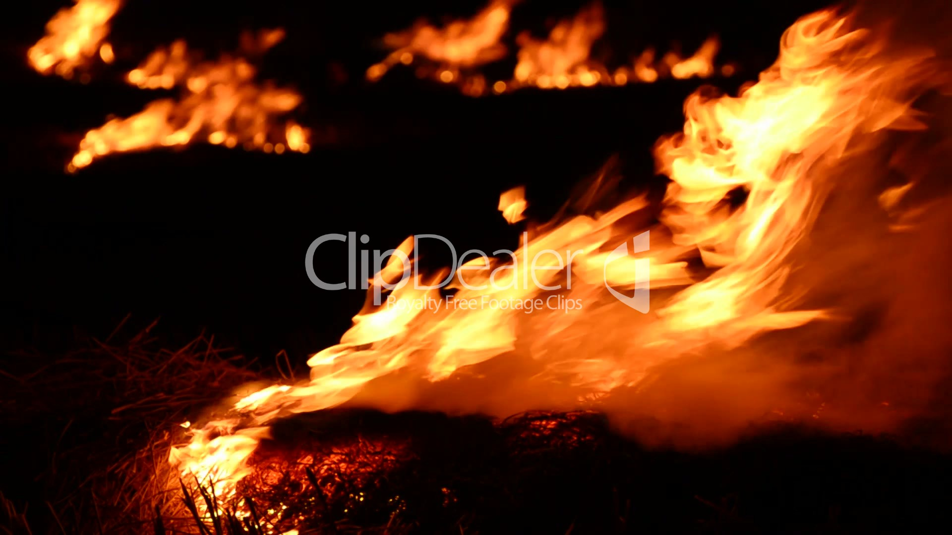 burning fire into dark forest natural background shoot with alpha