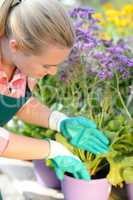 garden center woman planting purple potted flowers