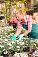 garden center woman touching potted daisy flowers