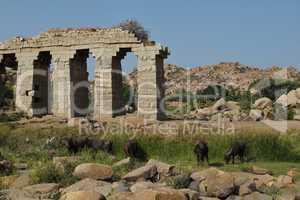 Ruin of a bridge and water buffalo