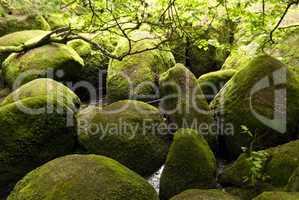 Nature Reserve Doost