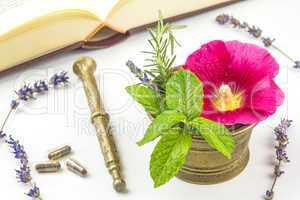 Naturheilunde mit Heilpflanzen