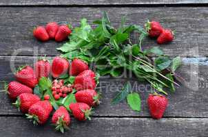 Cultivated and wild strawberries