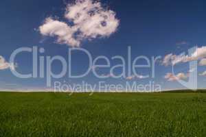 Weide, Feld, Himmel, blau, Wiese, grün, saftig, Wolken, weiß, klein, Desktop, Hintergrundbild, Landschaft, schön, pur, Panorama