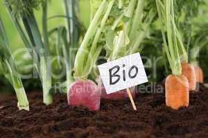 Gesunde Ernährung Bio Gemüse im Garten