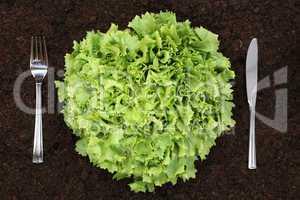 Gesunde Ernährung Salat im Gemüse Garten