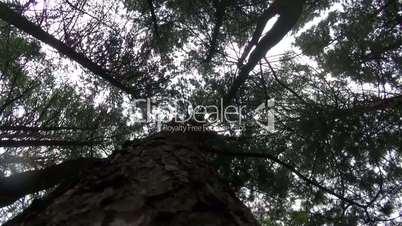 Squirrels running around the tree trunk