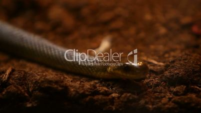 Snake on ground