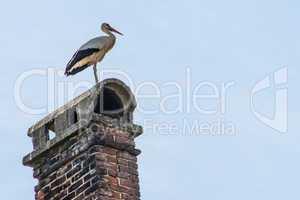 Storch auf einem Kamin