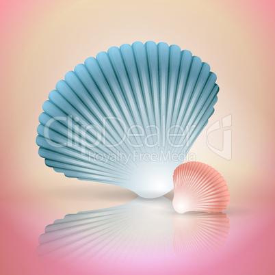 big and small seashells