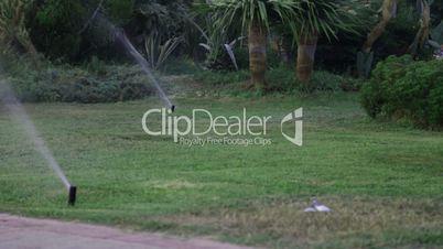 Grass Sprinkler watering