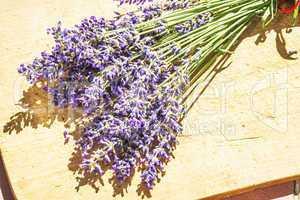 Lavendel, frischer Strauß