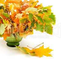 composition of autumn leaves isolated on white background