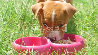Cute and hungry puppy dog eating his food
