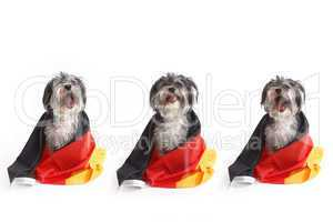 Dogs with German flag shouts in front of white background