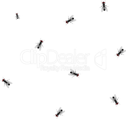 Fly seamless insect sketch symbol illustration. Housefly vector icon design.