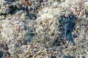 Arctic vegetation