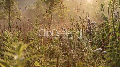 grass against the morning mist