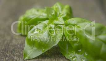 Basil leaves with water droplets on rustic weathered wood background