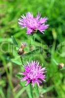 pair of pink flowers in the green grass