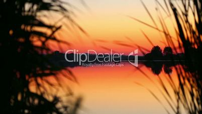 Reflection of the setting sun in the water. Evening landscape. Sunset over the river. Silhouette of plants at sunset.